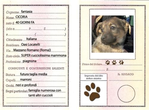 carta_identita_cicoria-copy
