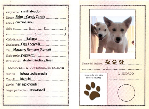 carta_identita_shiro-e-candy-copy